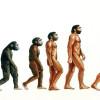 Human Evolution Tree