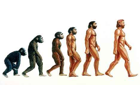 Human Evolution Tree